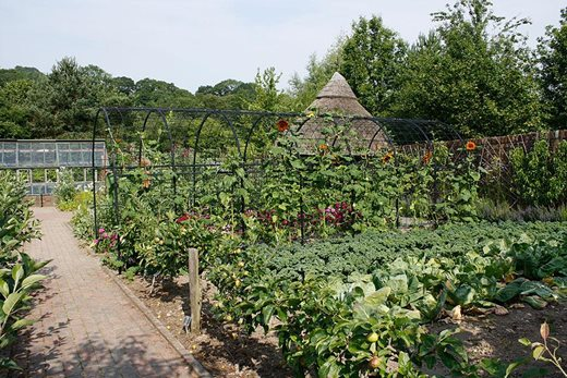 The fruit and vegetable garden