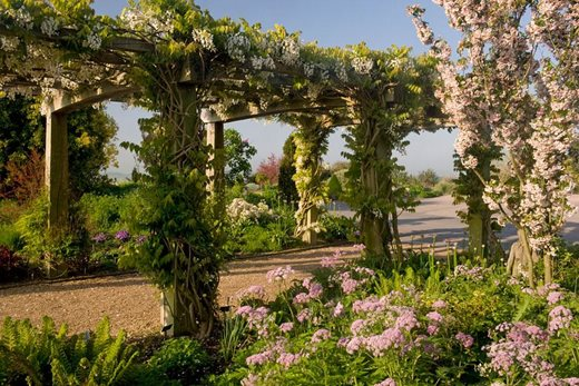 Wisteria and blossom at Hyde Hall