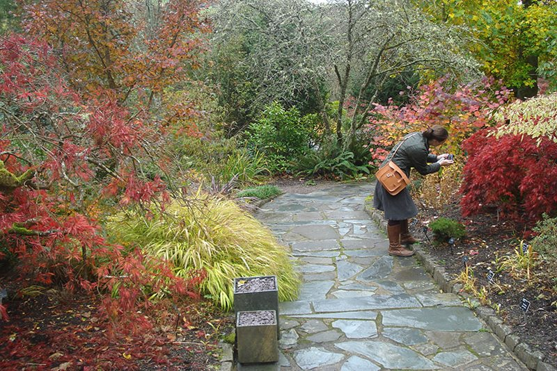 Woman photographing acers in the Stone Garden