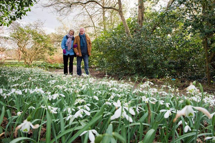 Drifts of snowdrops light up Oakwood and other areas of RHS Garden Wisley