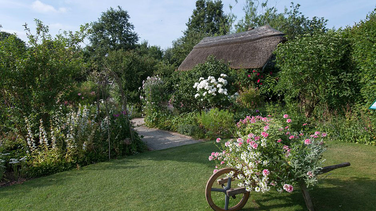 Cottage Garden in summer