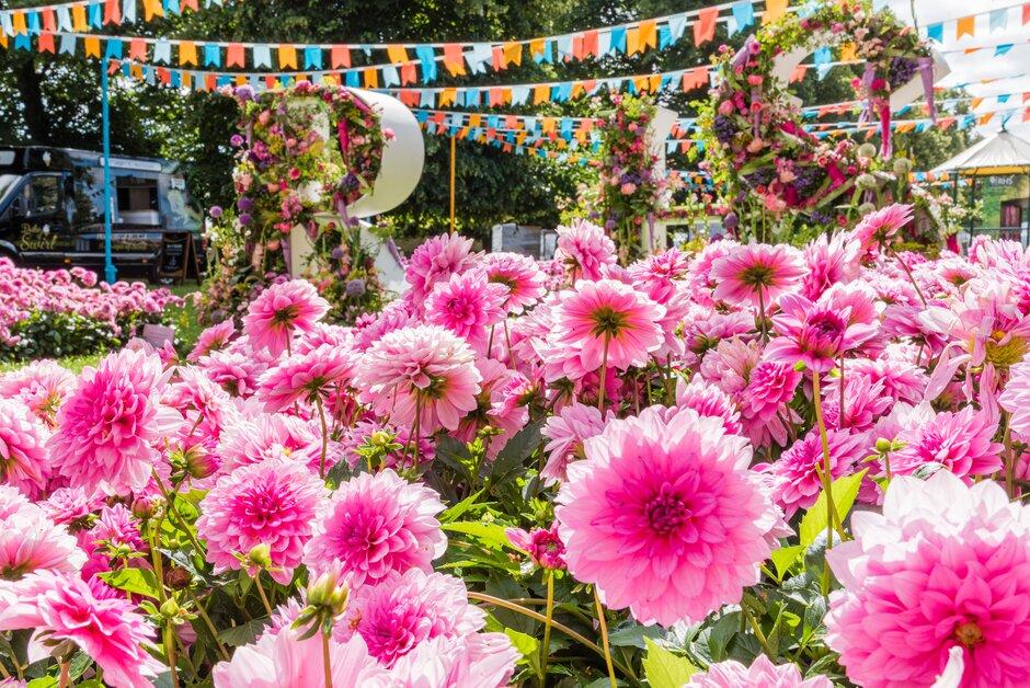 Highlights of the RHS Hampton Court Palace Garden Festival 2019 / RHS  Gardening
