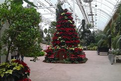 Christmas displays in the Glasshouse