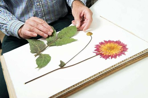 view the royal horticultural society s plant trials and